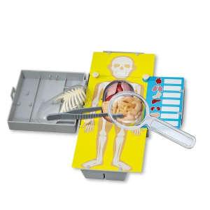 Az emberi test anatómiája - Torzó 30994196 Orvosos játék