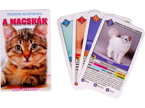 Macskák ismeretterjesztő kártya 31039510